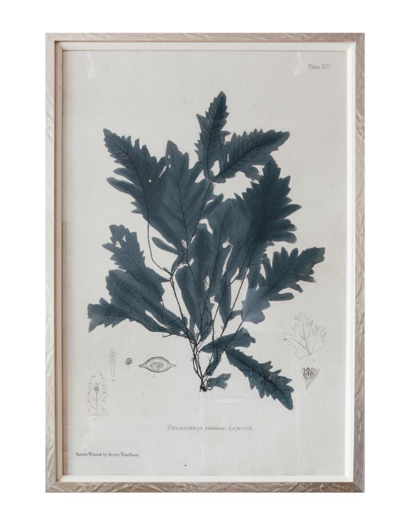 Framed Grey Seaweed