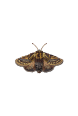 Trovelore GOLD MOTH BR