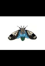Trovelore CRAMBID BLUE MOTH BR