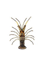 Trovelore GOLD LOBSTER BR