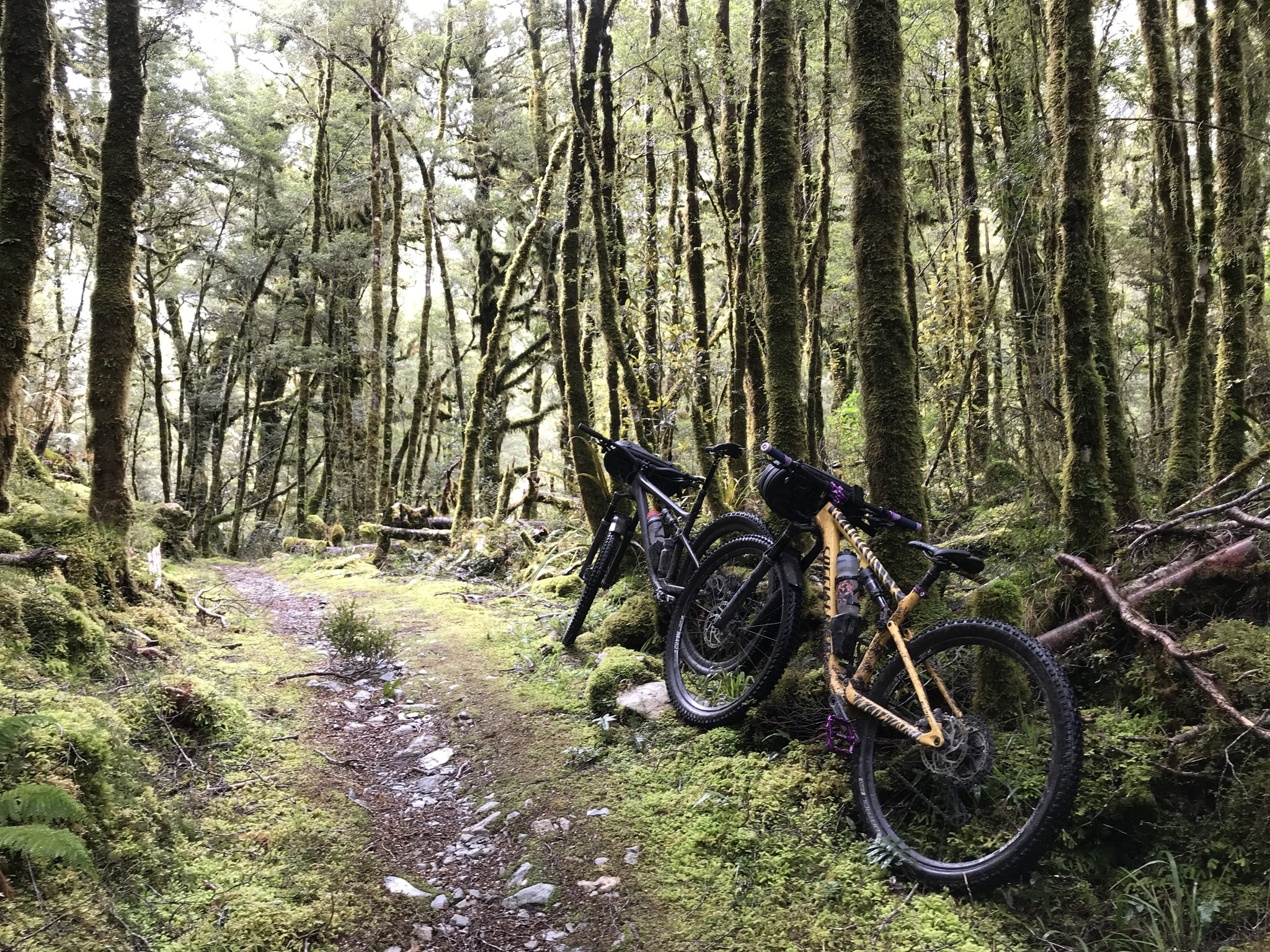 Old Ghost Road Trail