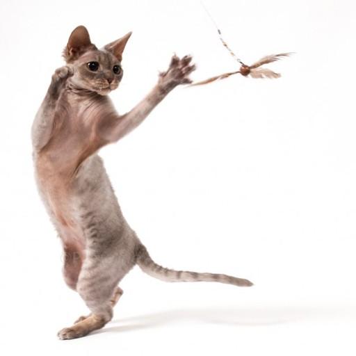 Go Cat Go Cat Purr-Peller
