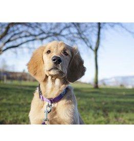 RC Pet RC Pet Primary Clip Collar