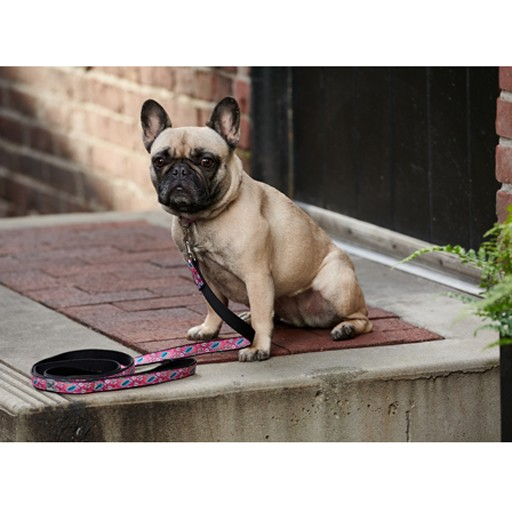 RC Pet RC Pet Dog Leash