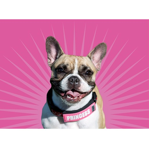 RC Pet Canine Friendly Bark Notes