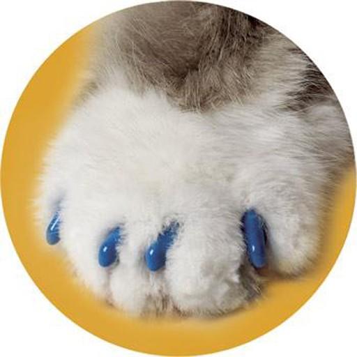Soft Claws Feline