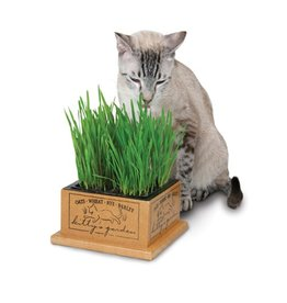Pioneer Pet Smart Kitty's Garden