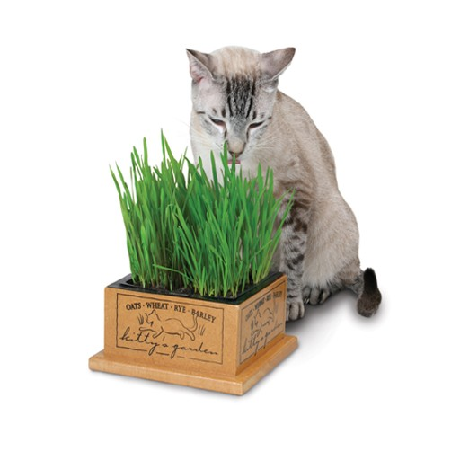 Pioneer Pet Smart Kitty's Garden
