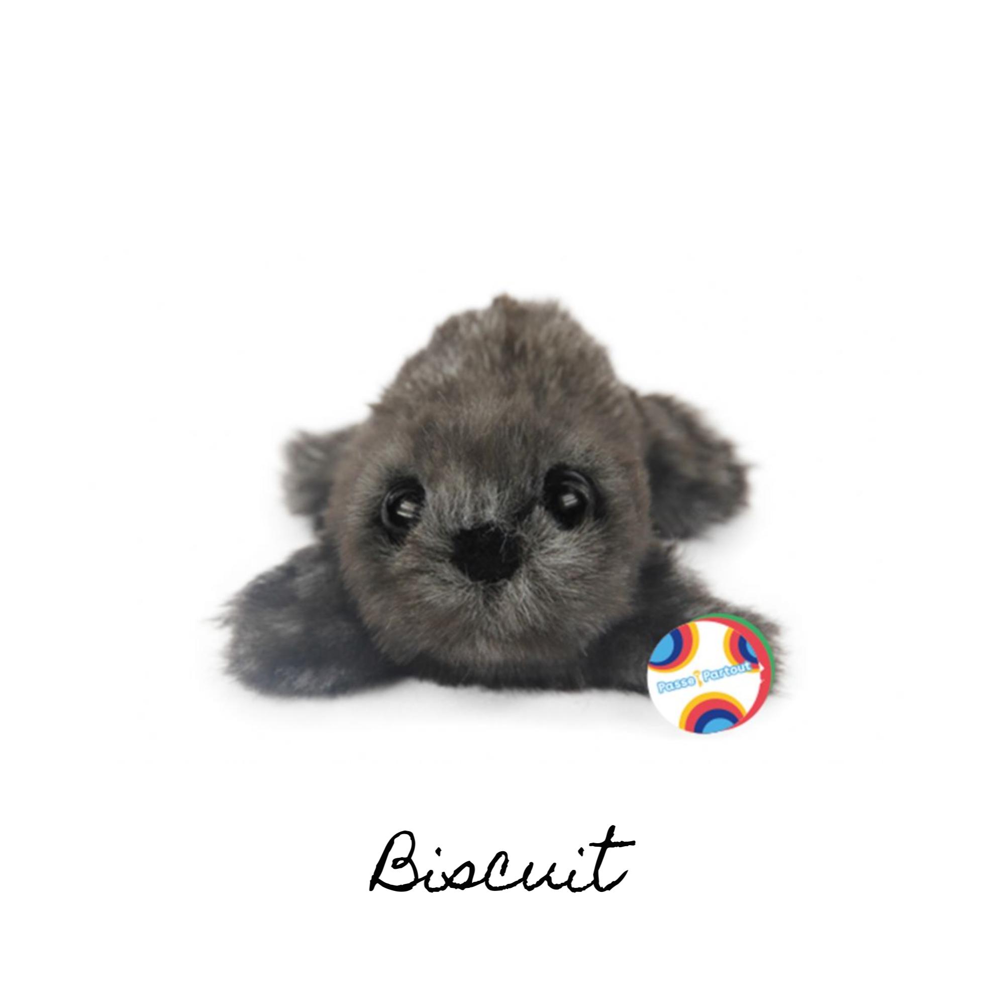 Passe-Partout : Biscuit
