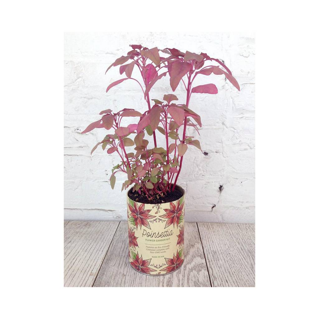 Modern Sprout Poinsettia Waxed Planter