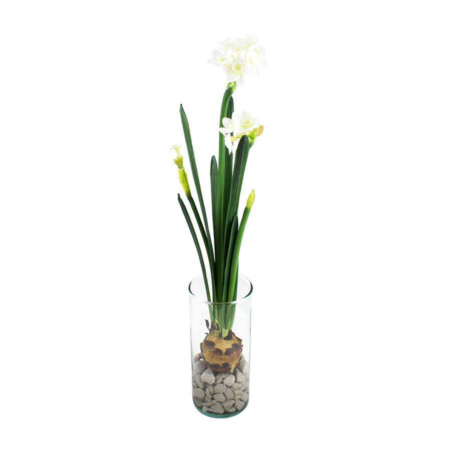 Modern Sprout Paperwhites Bulb Kit