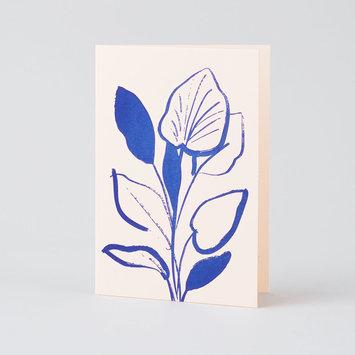 Wrap Lily Study