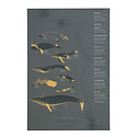 """Young America Creative - YAC Wrought Iron Whales Print, 13 x 19"""""""