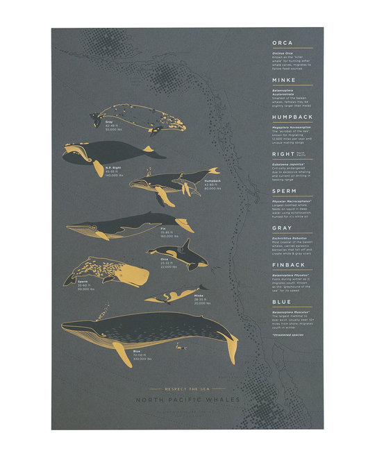 Young America Creative Wrought Iron Whales Print, 13 x 19""