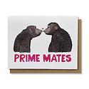 Nanu Studio Prime Mates
