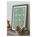 Young America Creative - YAC Mid-Green Fruit and Vegetable Print, 13x19