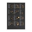 Young America Creative - YAC Ebony Seafood and Shellfish Print, 13 x 19 inch