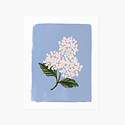 Rifle Paper Co - RP Rifle Paper Co - Blue Hydrangea Bloom Print, 8 x 10 inch