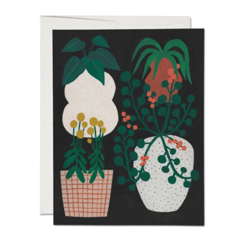 Red Cap Cards - RCC Indoor Plants Cards, Boxed Set of 8