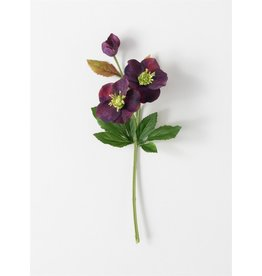 Sullivans PURPLE HELLEBORUS STEM PICK