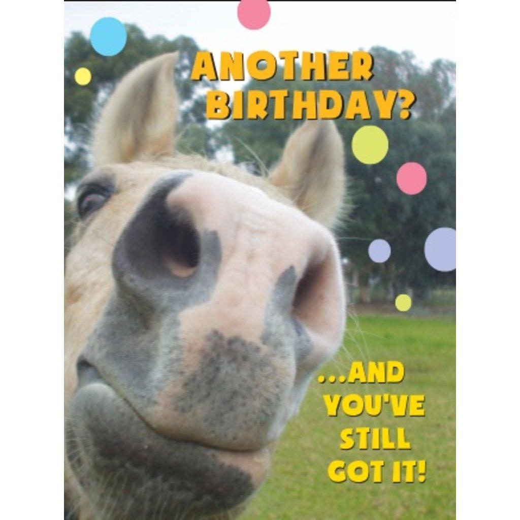 Horse Hollow Birthday Cards