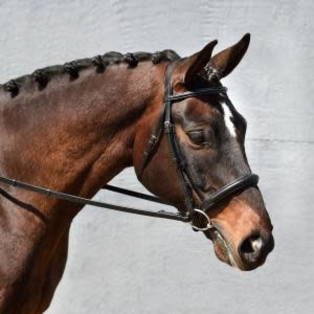 Bobby's Self Lined Bridle
