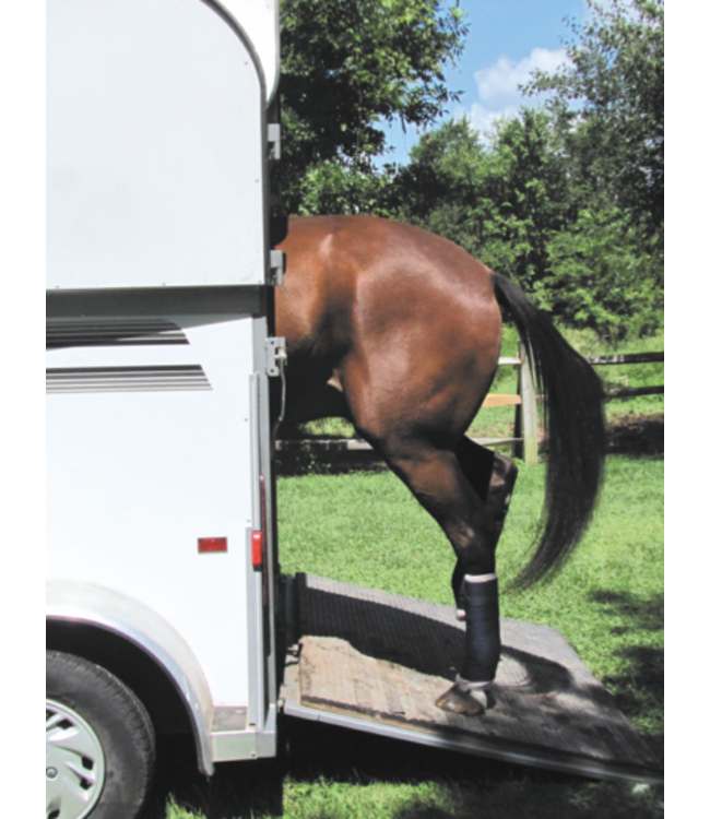 Horse Hollow Press Horse Hollow Birthday Cards Get Loaded