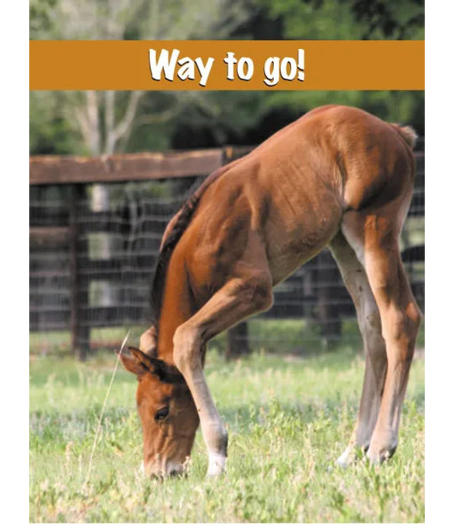 Horse Hollow Greeting Card Way to Go