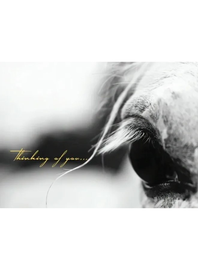 Horse Hollow Sympathy Card Thinking of You