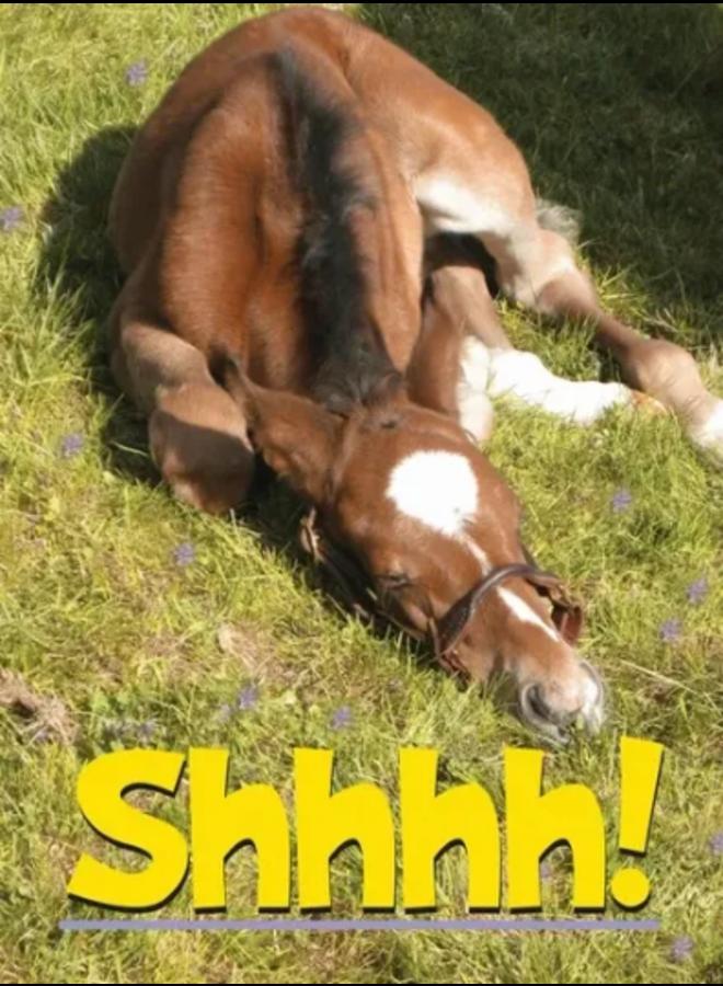 Horse Hollow Birthday Card Shhh!