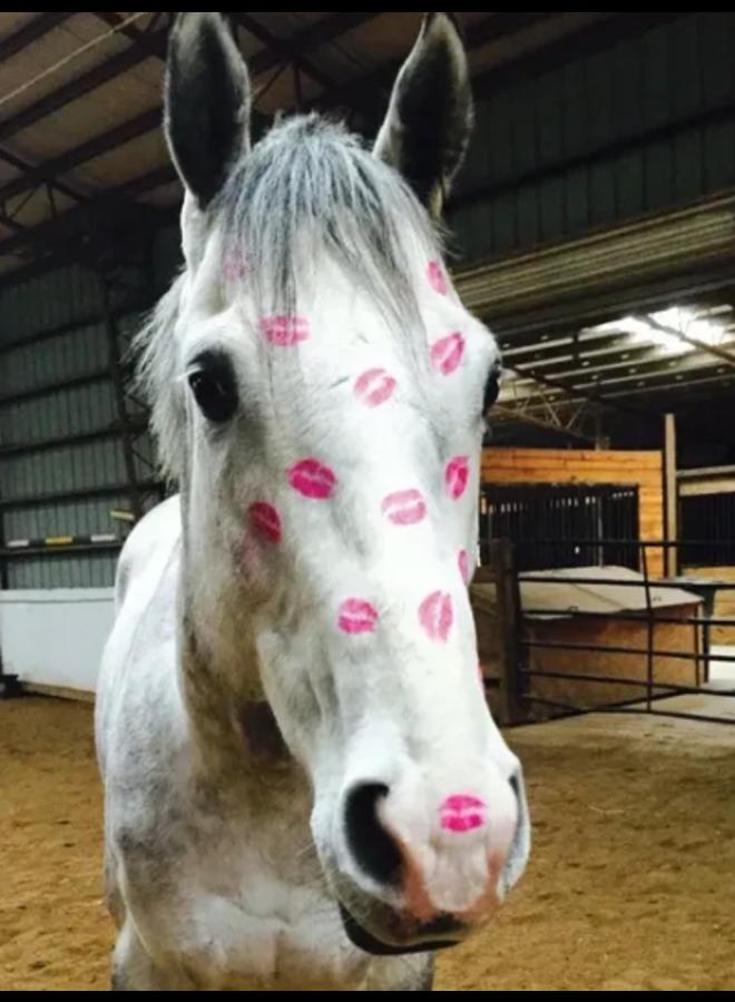 Horse Hollow Birthday Card Kisses