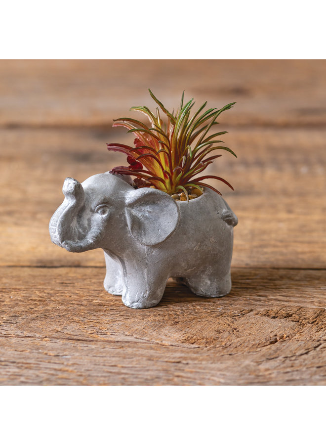 Elephant with Succulent