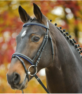 Star Bridle Diamond Blue Cob