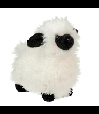 Douglas Shiloh Sheep