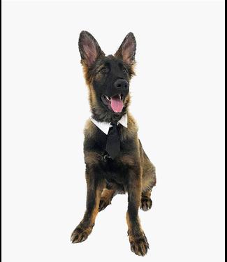 Midlee Designs Formal Black Dog Tie Medium