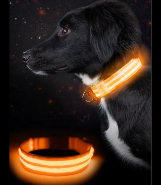 Mighty Paw LED Dog Collar