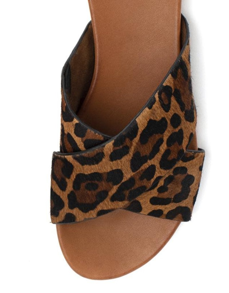 Yellow Box Cammee Leopard