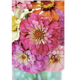 Paint By Numbers - Zinnia