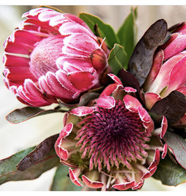 Paint By Numbers - Protea Pink Flowers