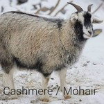 Cashmere/Mohair