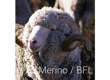 Merino/BFL