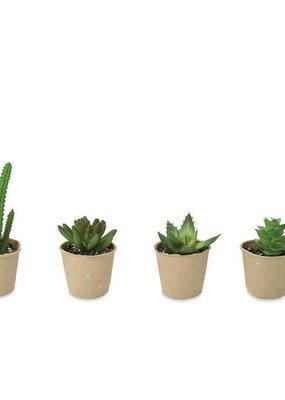 ***Paper Pot Succulent