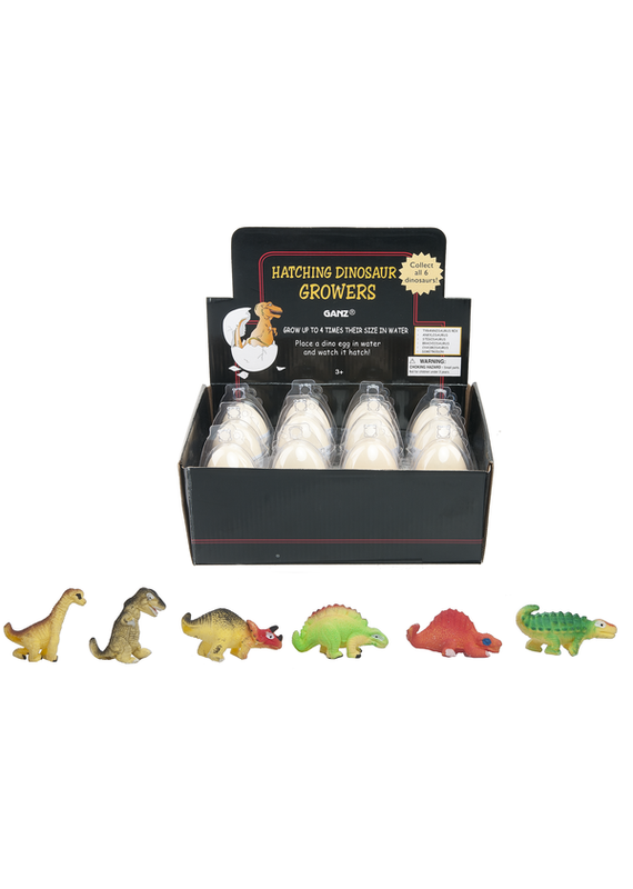 ****Hatching Dinosaur Eggs