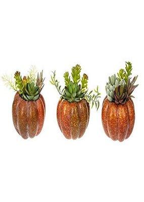 ***Pumpkin Succulent Figurine (1ct)