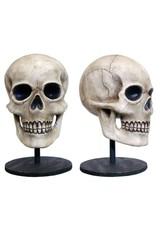 Bethany Lowe Bone Head
