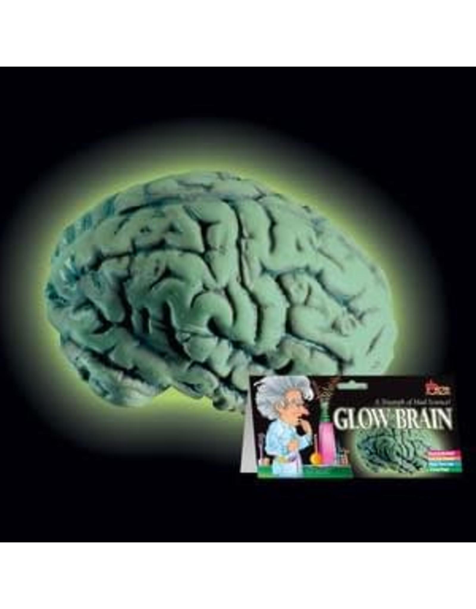 Loftus Glow Brain