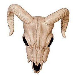 Seasons Ram Skull