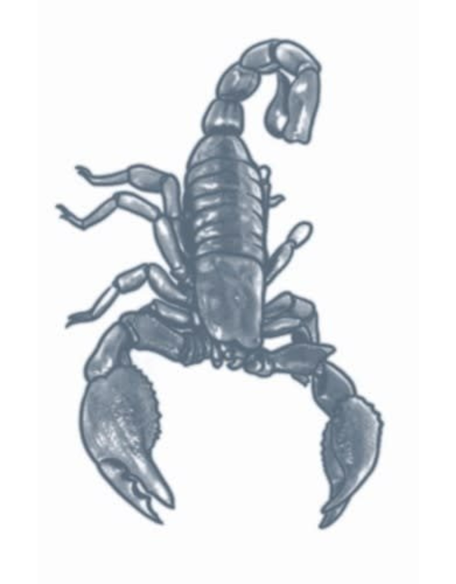Tinsley Transfers Scorpion Tattoo