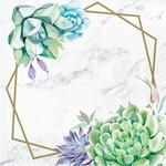 Napkins - Geometric Succulents - 16 pk