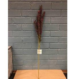 Giant Millet Spray, Burgundy
